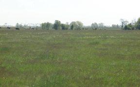 Pășunile comunei Vurpăr sunt certificate eco