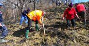 Amplă acţiune de împădurire la Mediaș