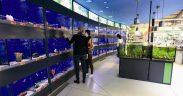 Hornbach aduce peste 4.000 de peşti din 150 de specii în noul  magazin din Sibiu