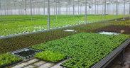 Hornbach oferă sibienilor soluţii pentru a-şi cultiva singuri legumele