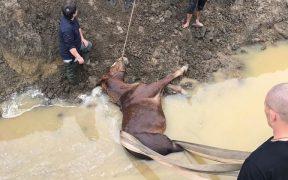 Pompierii au salvat un cal căzut într-un canal din Apoldu de Sus