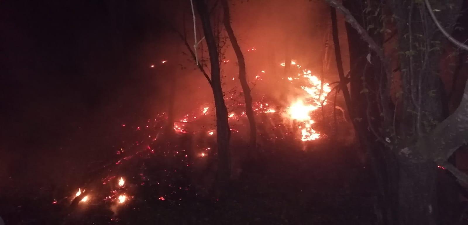 Incendiul de vegetație uscată și fond forestier în zona Mălâncrav