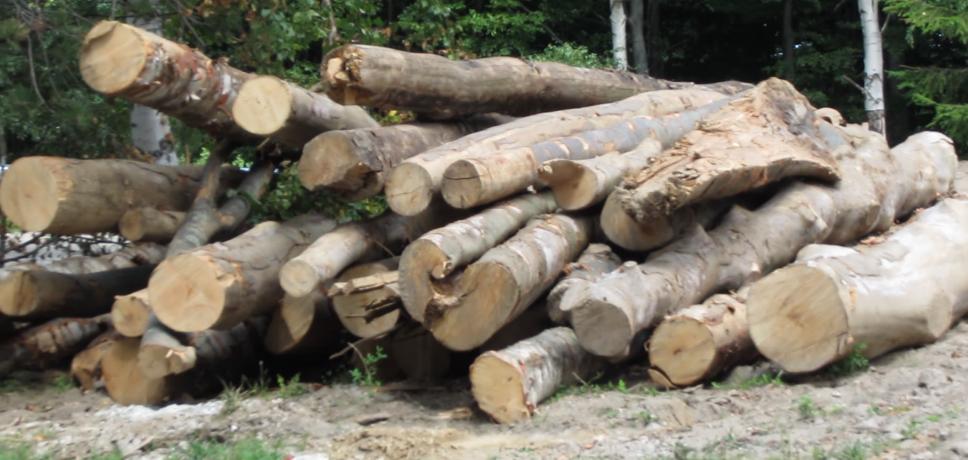 Amendat cu 1.000 de lei pentru furt de lemne