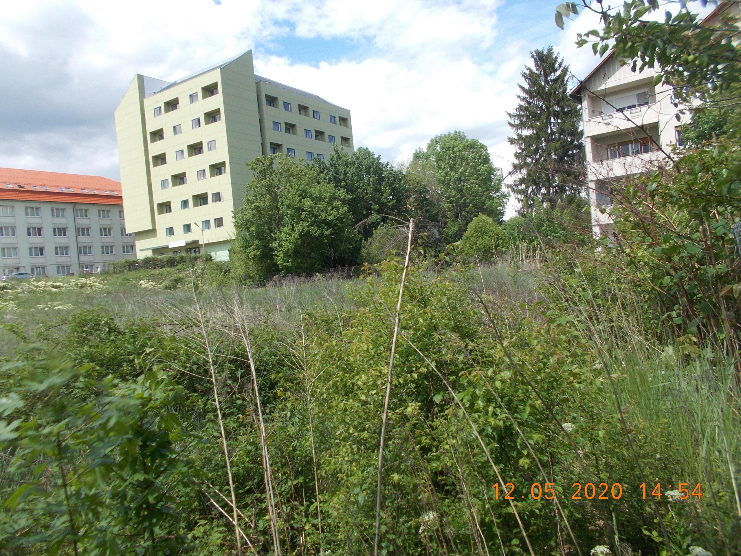 Poliția Locală continuă activitățile de verificare a terenurilor neîngrijite din Sibiu
