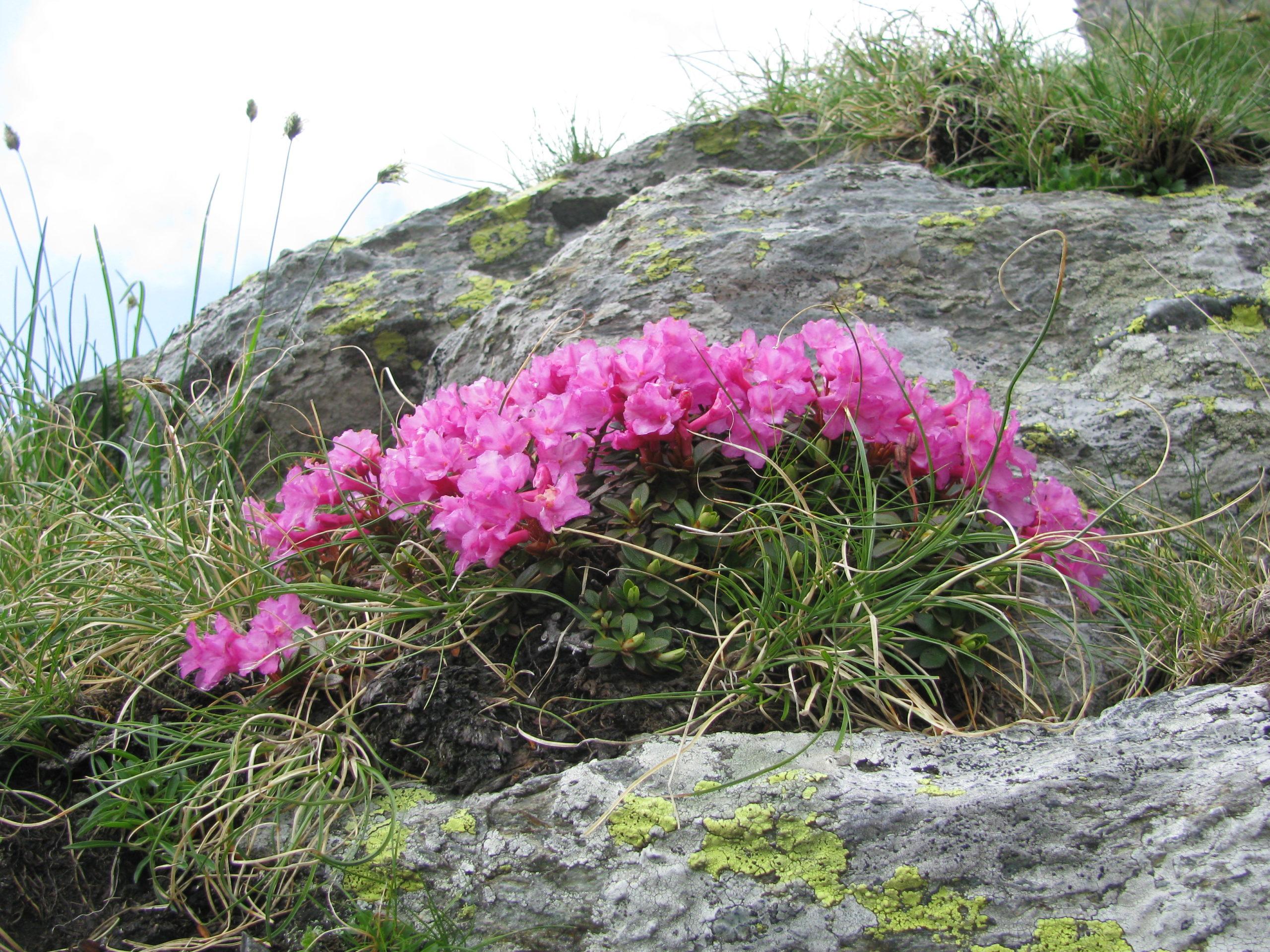 Ziua Mediului este dedicată în acest an celebrării biodiversității
