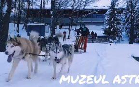 VIDEO- La plimbare cu sania trasă de câini prin Muzeul Astra