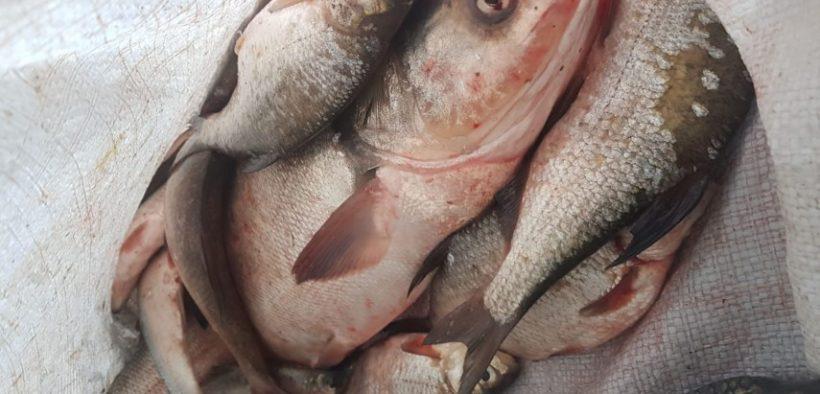 Trei bărbați pescuiau ilegal râul Olt, în zona localității Turnu Roșu