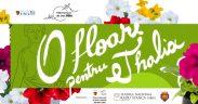 Flori în loc de bilete la Filarmonica Sibiu