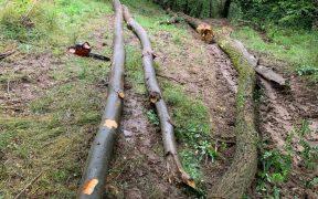Riscă să fie arestați pentru tăiere ilegală și furt de lemne din fondul forestier național