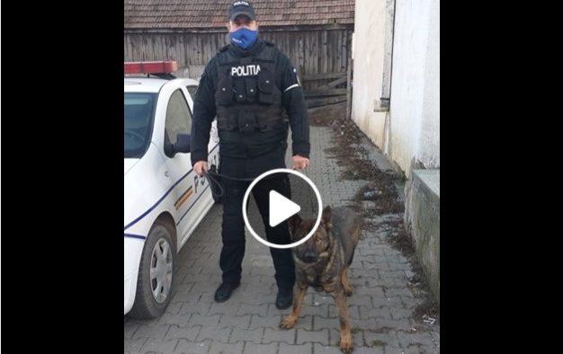VIDEO: Bărbat atacat de o haită de câini, în Poplaca. L-a salvat șeful echipei operative canine IPJ Sibiu