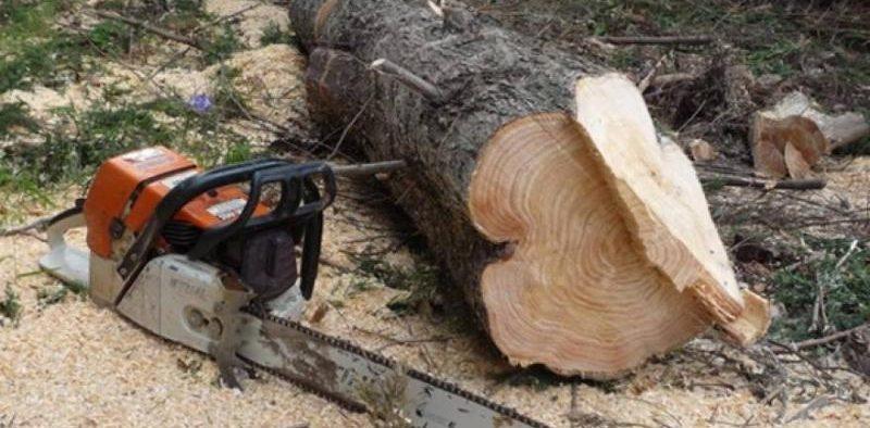 Trei persoane au tăiat ilegal și au sustras arbori de pe raza localității Chirpăr