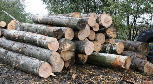 Bărbat de 19 ani, cercetat penal pentru tăiere ilegală și furt de arbori