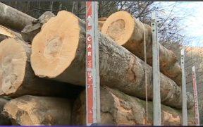 Amendat cu 6.000 de lei pentru furt de lemne