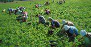 900 locuri de muncă în domeniul agricol prin intermediul Reţelei EURES ROMÂNIA