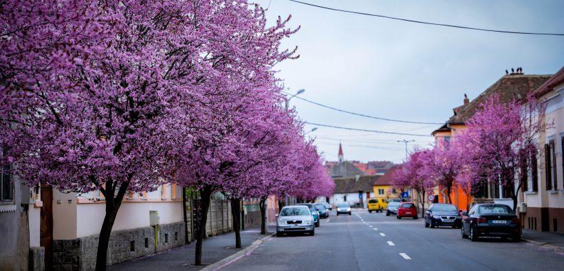 În fiecare an, o stradă din Sibiu se transformă într-unul dintre locurile de poveste ale oraşului