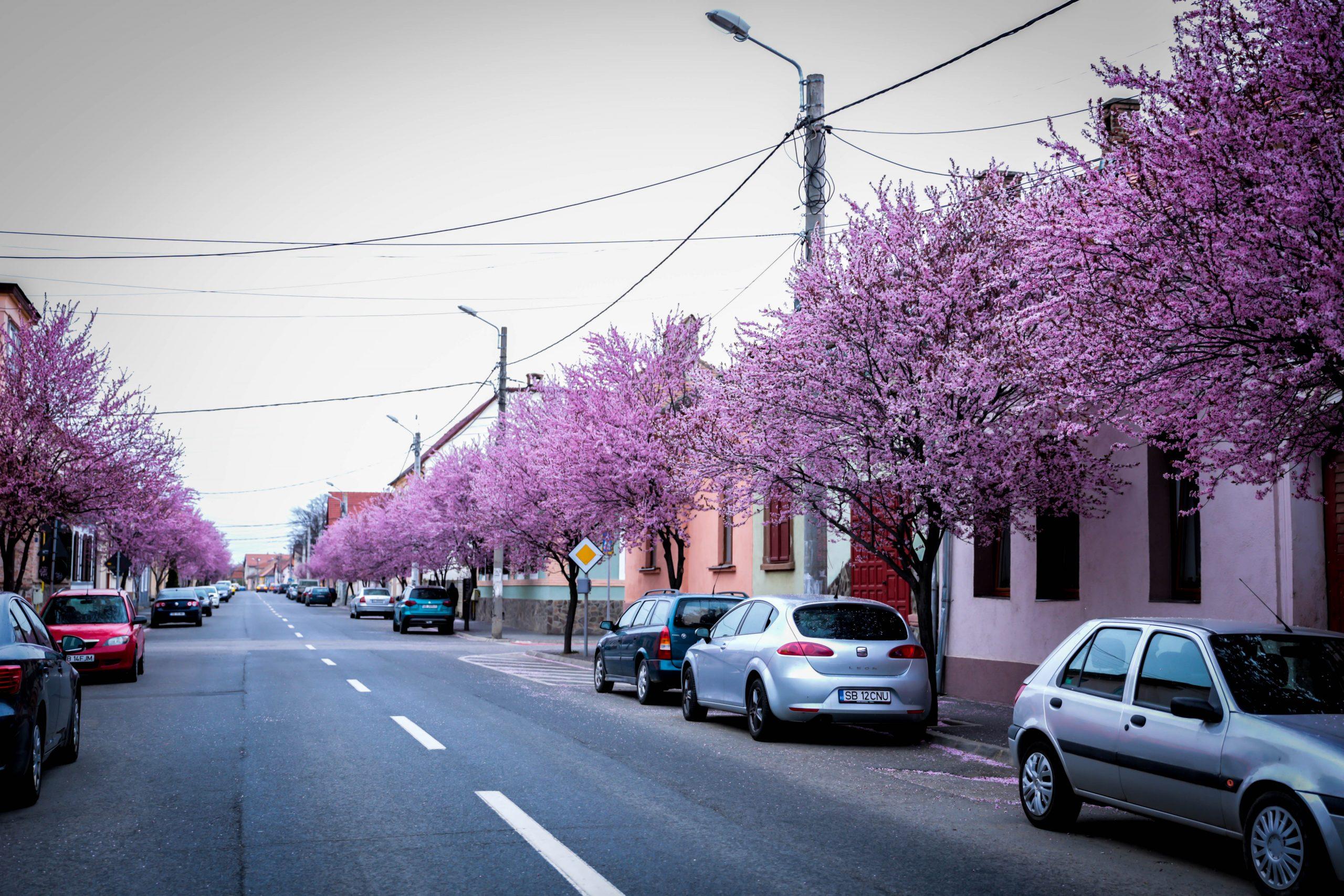 FOTO | În fiecare an, o stradă din Sibiu se transformă într-unul dintre locurile de poveste ale oraşului