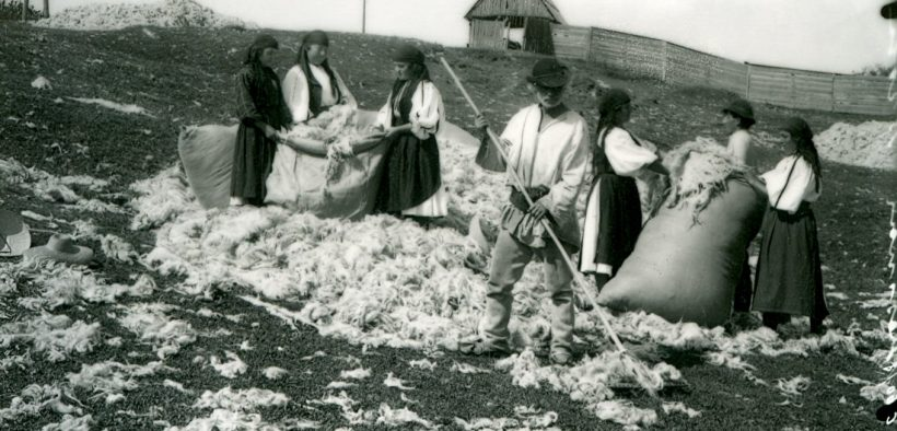 Muzeul ASTRA, gazda unui atelier de tuns oi