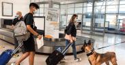 Aeroportul Internațional Sibiu, primul centru pilot din România în depistarea infecţia cu SARS-CoV-2 de către echipaje canine